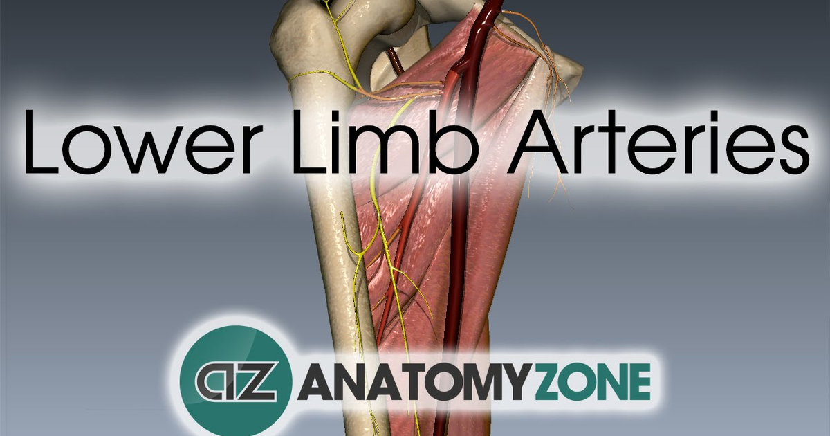 Lower limb arteries overview 3d anatomy tutorial on meducation ccuart Choice Image