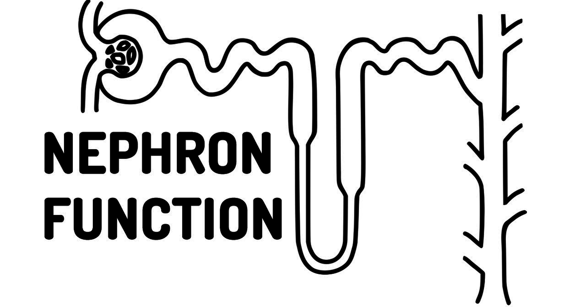 function of the nephron made easy   on meducation