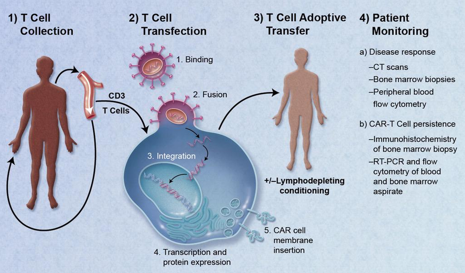 Immunotherapy and Cancer Diagram