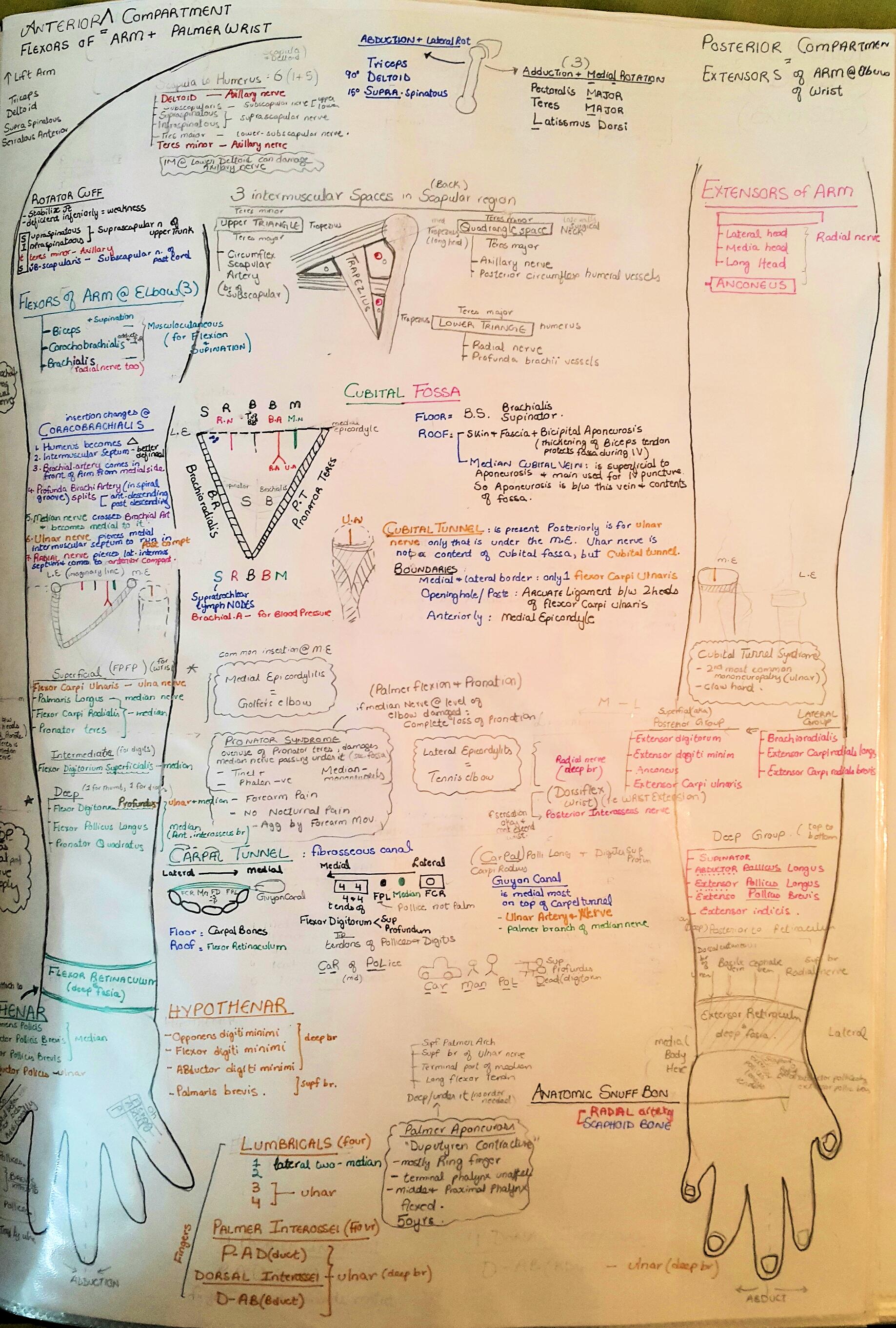 Illustrated Anatomy of Upper-limb
