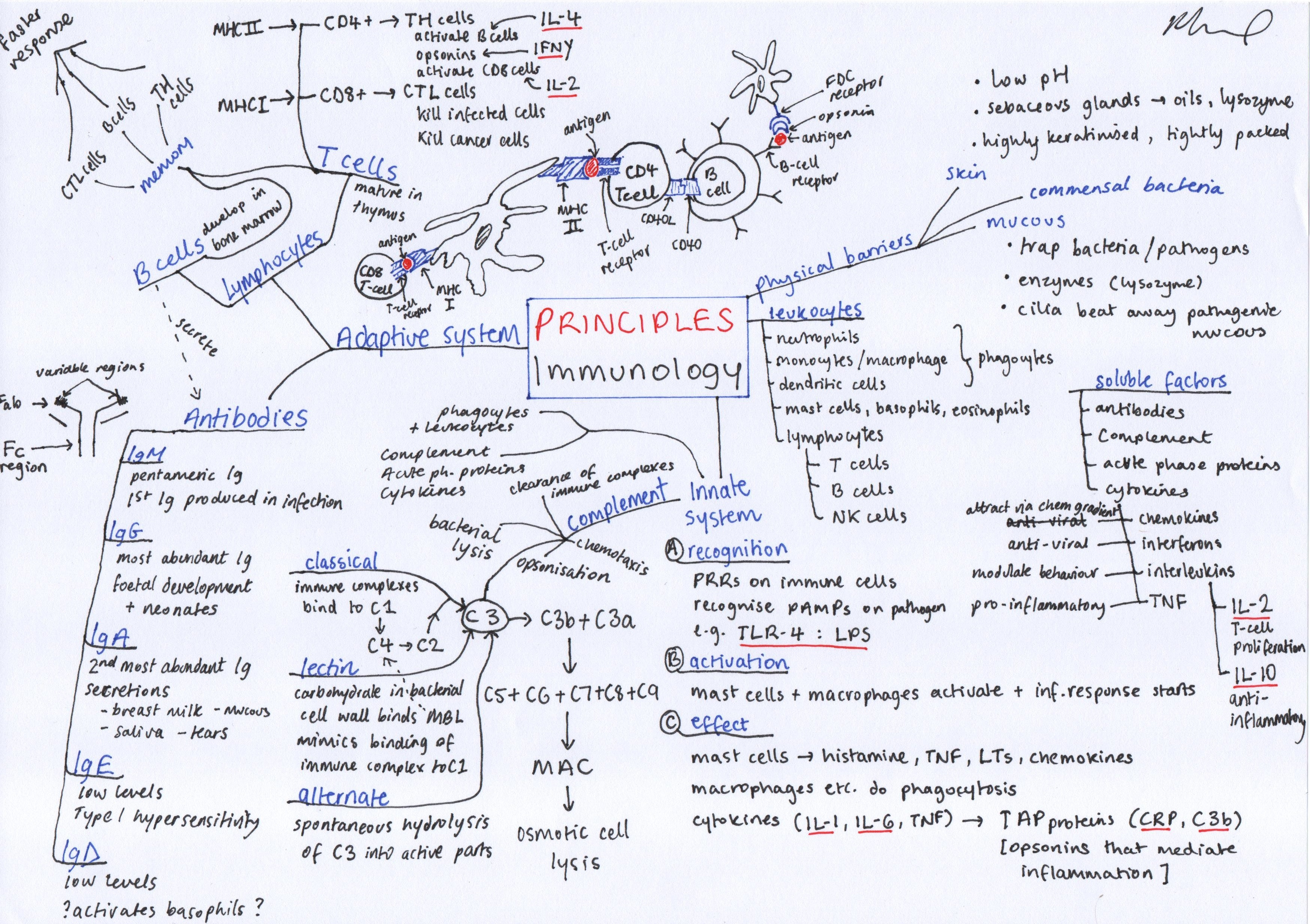 Adaptive Immunity Concept Map.Immunology Principles Mindmap On Meducation