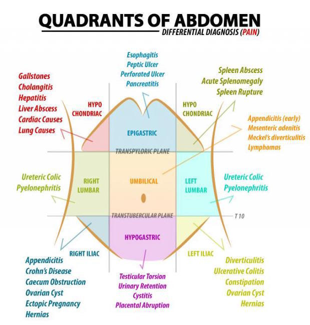 Quadrants of the Abdomen on Meducation