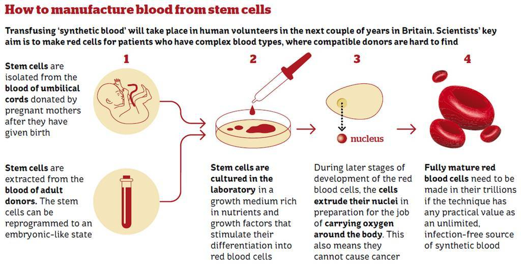 How to manufacture blood from stem cells