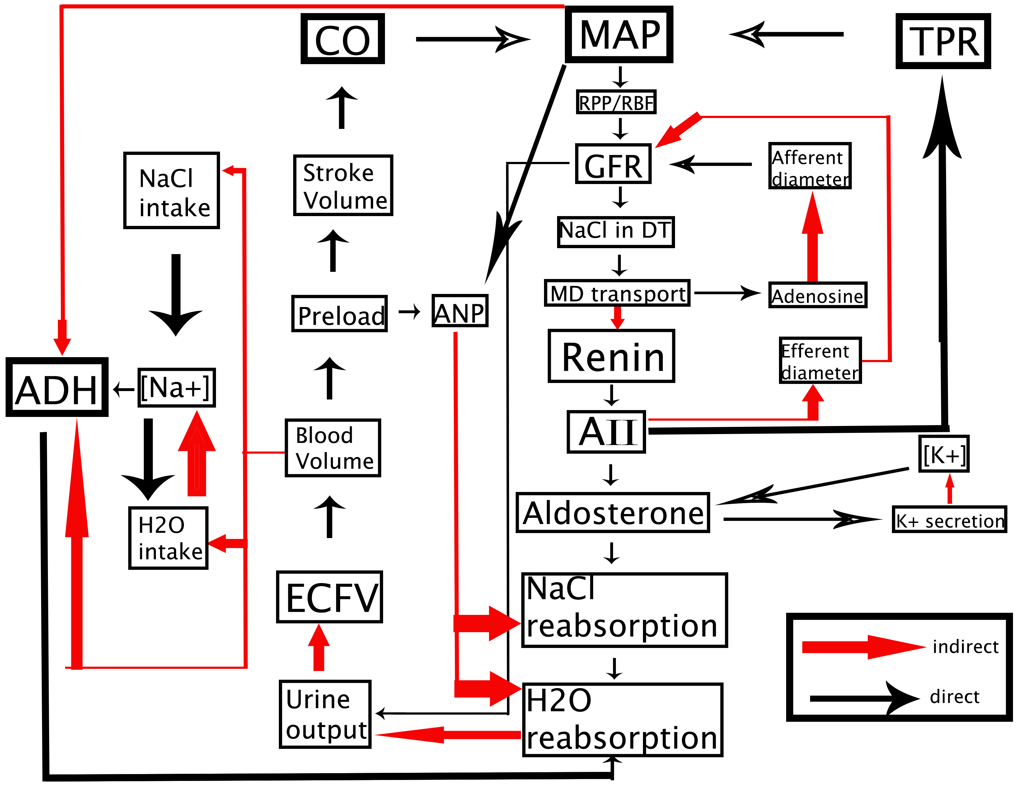 Cardio-Renal physiology chart