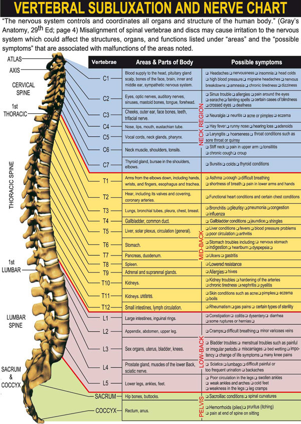 Vertebral Subluxation and Nerve Chart