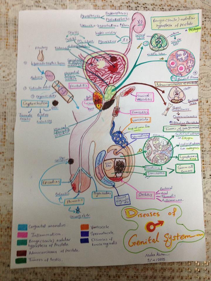 Diseases of male genital system