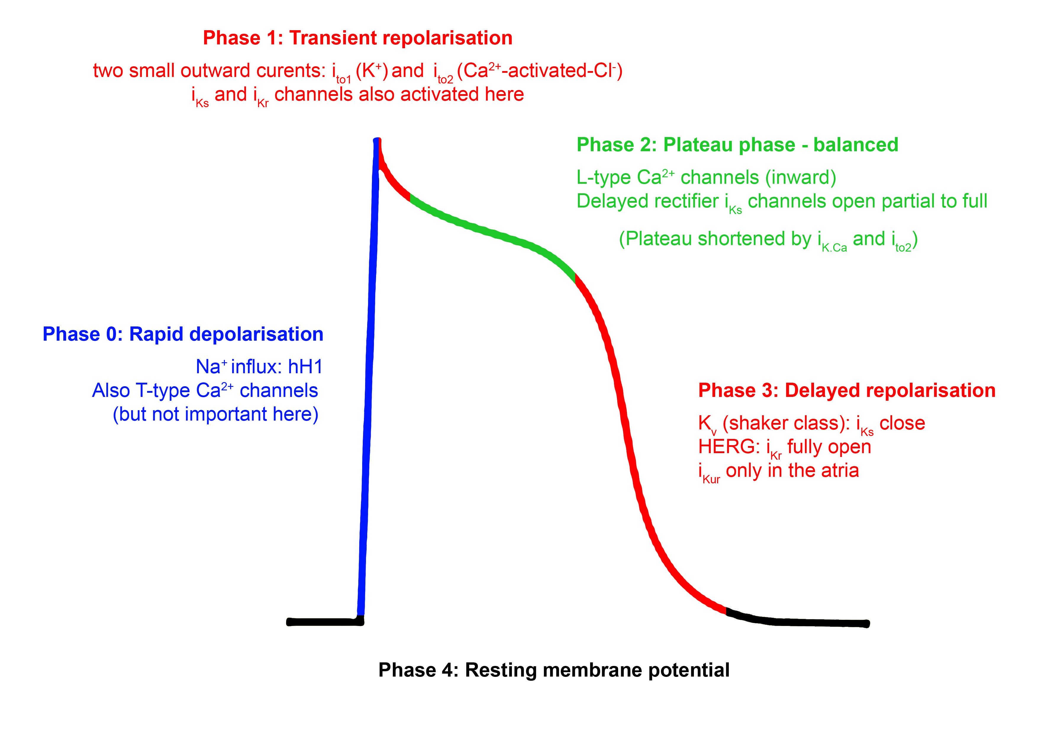Atrial depolarisation