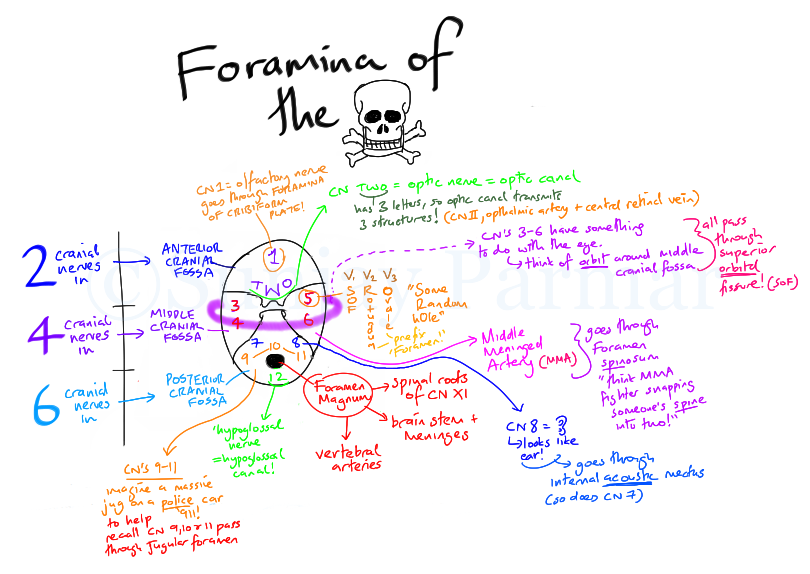 Foramina Of The Skull Visual Mnemonic On Meducation