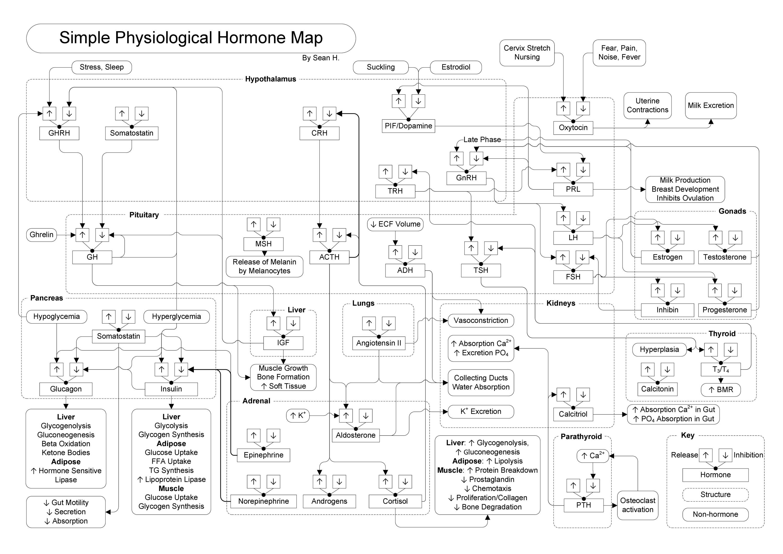 Hormone Map