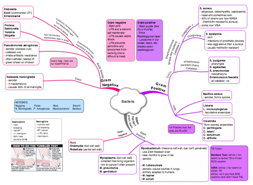 Microbiology Concept Map.Bacteria Mind Map On Meducation