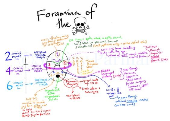 Cranial nerves mnemonic